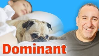 How to stop your dog from being dominant