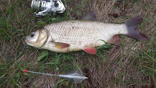 Весна язь рыбалка на поплавочку