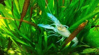 Фильтр для аквариума тонкой очистки Filter for fine cleaning aquarium