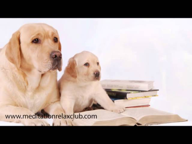 Pet Therapy: Dog Spa with Healing Music for Pet Care and Dog Day Care