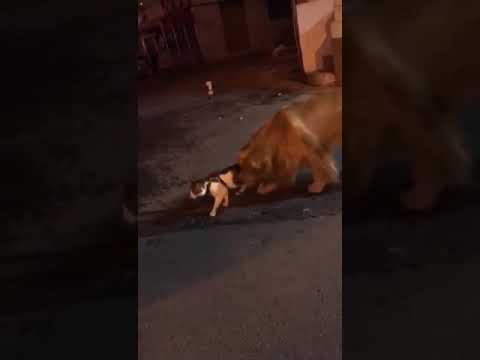 Dog Stops His Cat Friend from Fighting