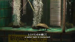 preview picture of video 'カブトガニは食用  Horseshoe crab is used for food'