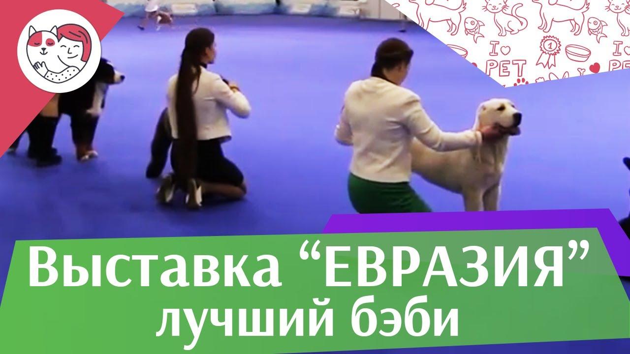 Best in show Лучший бэби 19 03 17 на Евразии ilikepet