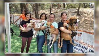 D Todo - Adopción de perros y gatos