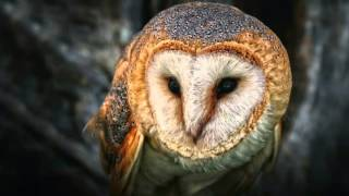 Xavier Rudd - Spirit Bird lyrics on screen