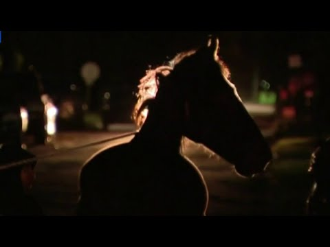 Police called to Highland Park neighborhood after horse gets loose