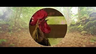 Angavaalanum Arabi Naadum Short Film | CSFF Season 5