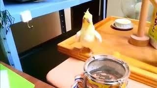Попугай жжёт очень смешной