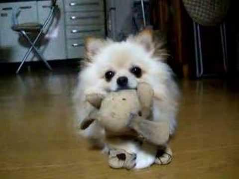 小狗在想你為什麼看著我?好可愛的眼神!