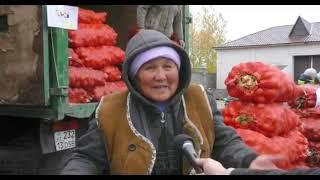 Экибастуз  Новости  Еженедельная ярмарка в Экибастузе  Картофель привезли и Железинка и Аксу