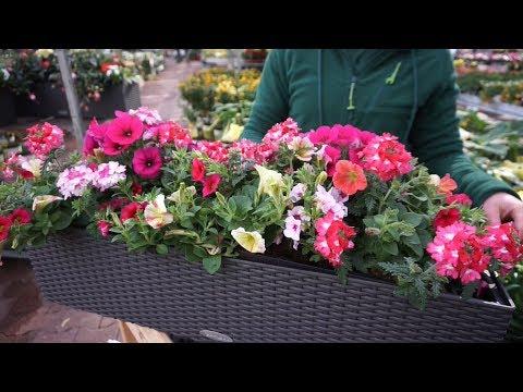 Prachtvolle Sommer-Balkonkästen - einfaches Bepflanzen von Lechuza Balkonkästen