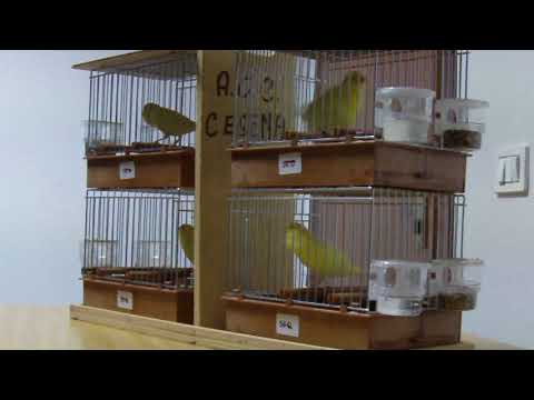 immagine di anteprima del video: Stamm Abbondanza Italo 450 punti (2°classificato)