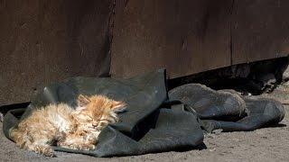 Бездомные кошки - кто их разводит. Тронуло до слез / Homeless cats