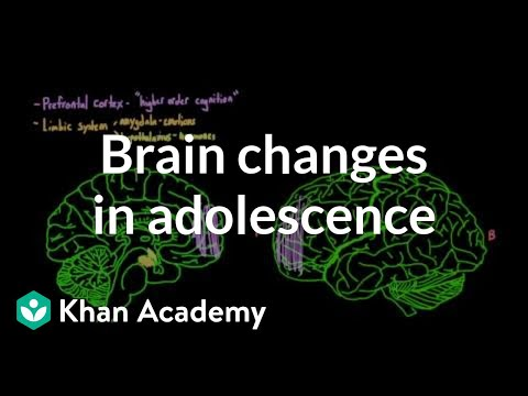 changes during adolescence Changes in emotional capacity, including improvements in affective modulation and discrimination of emotional cues, are also seen during adolescence.