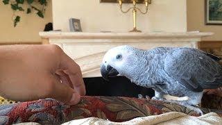 попугай жако просит погладить его
