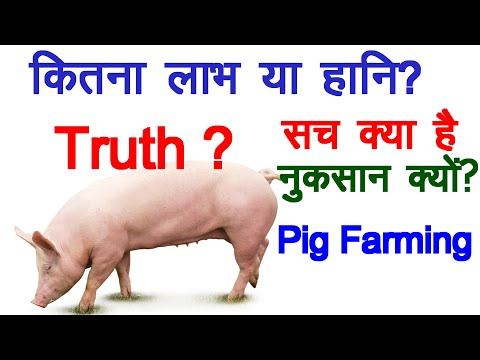 , title : 'Loss or profit in Pig Farming? What is truth. सच क्या है?