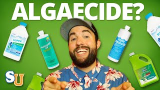 The TRUTH About Using ALGAECIDE In Your POOL | Swim University