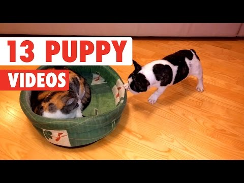 13 Funny Puppy Videos Compilation 2017