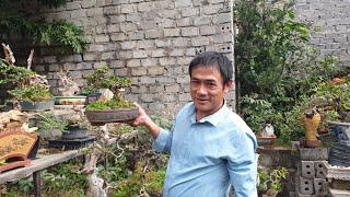 SH.3420.Báo giá 2 tr cây Sam trái bonsai mini của Lâm mạnh Việt. Phủ Lý. Hà Nam.