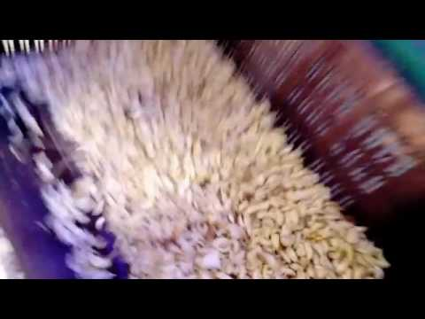 Small Garlic Sorter