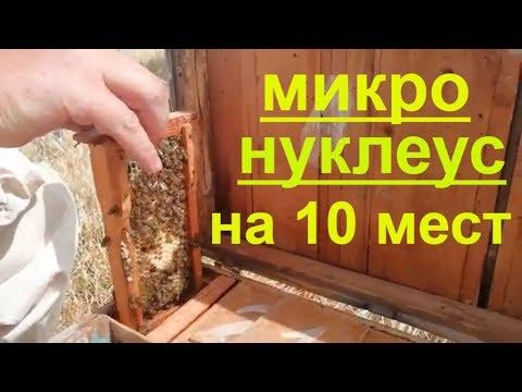 Пчеловодство,микронуклеус на 10мест,облет матки,засев