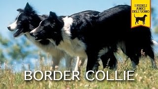 BORDER COLLIE Trailer Documentario