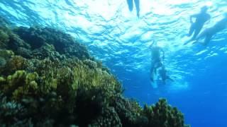 Египет. Экскурсия 31.01.14 Морская прогулка, рыбалка, Райский остров и коралловые рифы