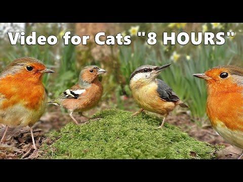 Video zur Katzenunterhaltung
