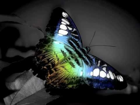 The Butterfly featuring GRP all star Dave Valentine