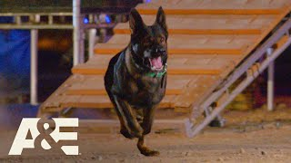 America's Top Dog: Live PD K-9 Dex vs. Team Falco (Season 1) | A&E