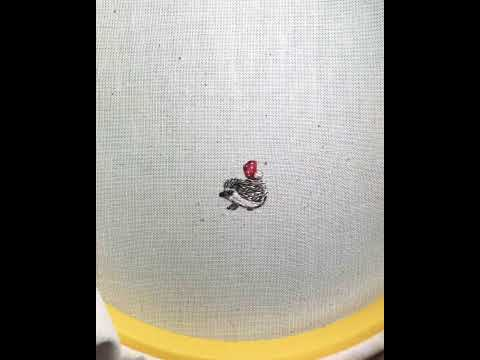 Time lapse of miniature hand embroidery