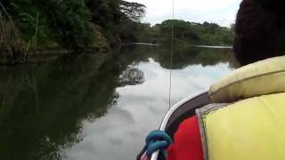 preview picture of video 'Sigatoka River Safari II, Fiji with Captain Joey'