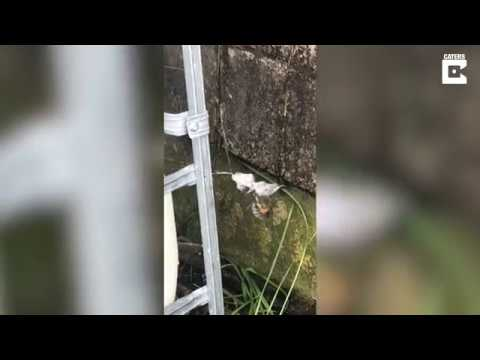 Spider Wraps and Eats Deadly Wolf Spider