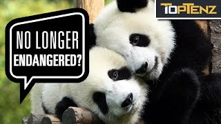 Top 10 ANIMALS That Are No Longer ENDANGERED