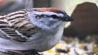 master intro to Birds of WNY  final