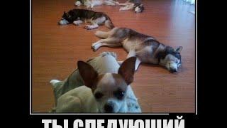 Подборка приколов с собаками