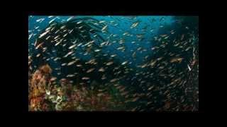 Thank You Ocean: Yesterday's Ocean