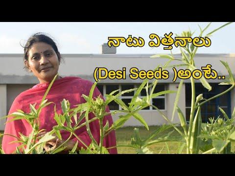 , title : 'నాటు విత్తనాలు(Desi Seeds )అంటే../Difference between desi and hybrid seeds/ Heirloom seeds/GMO seeds'