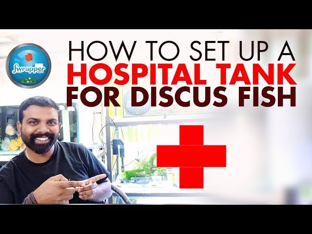 How To Set Up A Hospital Tank For Discus Fish || Treatment Fish Tank