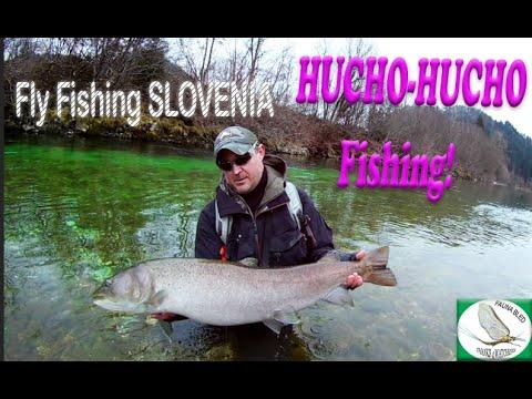 Euro Taimen Hucho-Hucho massive catch - FLY ROD!