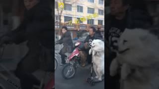 Собака на электросамокате