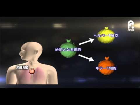 이화학연구소- 헬퍼T세포가 킬러모양T세포로 변화
