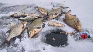 Смотреть онлайн Как ловить леща зимой