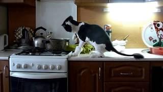 """""""Коты воришки!Лучшая нарезка приколов про котов!Хохма."""""""