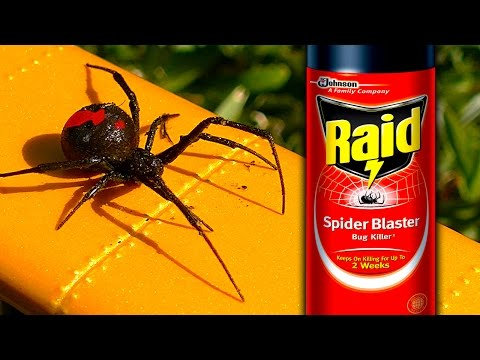 Sneaky Redback Spider Raid Deadly White Christmas How To Video