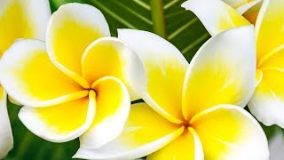 """Peaceful Music, Relaxing Music, Flute Music """"The Philippines"""" by Tim Janis"""