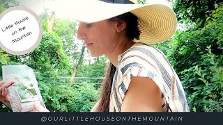 THERE IS BEAUTY ALL AROUND US || MOUNTAIN HOMESTEAD IN JULY