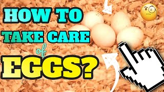 PAANO ALAGAAN ANG LOVEBIRD EGGS - HOW TO CARE & CHECK IF YOUR LOVE BIRD EGG IS FERTILE OR INFERTILE