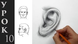 Как нарисовать такое ухо. Как рисовать уши карандашом - видео урок.