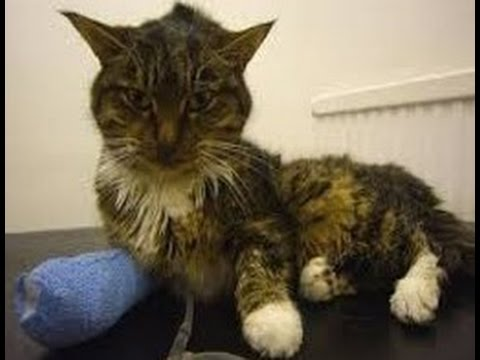 Video Five Silent Killers of Cats Part 1 (Chronic Kidney Disease)